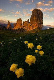 Фото Яркие цветы на холме перед горными образованиями, by Sapna Reddy Photography