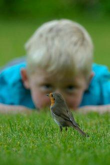 Фото Мальчик смотрит на воробья