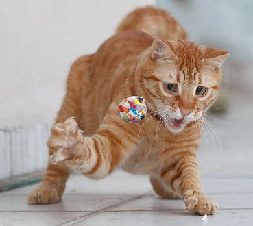 Фото Рыжий кот играет с игрушкой