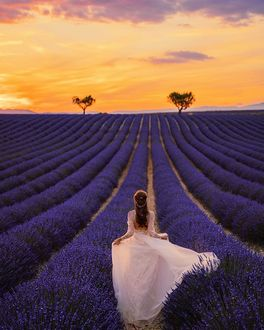 Фото Девушка на лавандовом поле, by bulavina