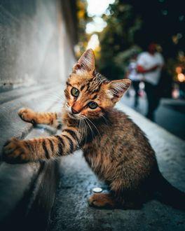 Фото Бездомный котенок у стены, by omeryesilirmak_