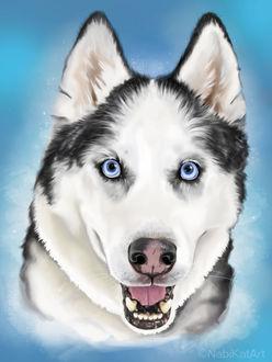 Фото Сибирская хаски на голубом фоне, by NabiKat