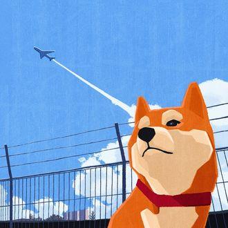 Фото Сиба-ину на фоне неба, в котором летит самолет, by won hye min