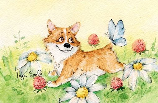 Фото Радостная собака породы вельш-корги с бабочкой на хвосте бежит среди цветов, by Inga Izmaylova