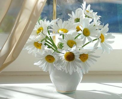 Фото Ромашки в белой вазе на окне