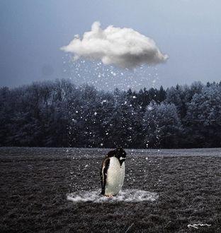 Фото Пингвин стоит под единственной тучей, из которой идет снег, by karencantuq
