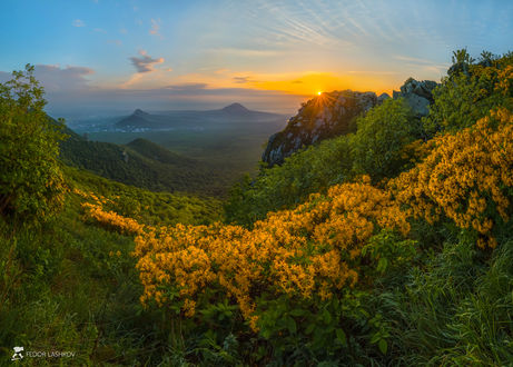 Фото Цветы желтого рододендрон у подножия гор на рассвете. Фотограф Лашков Федор