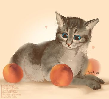 Фото Полосатый котик Оззи смотрит на персики, by Siplick