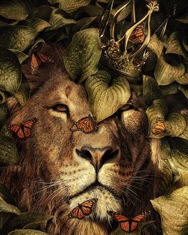 Фото Царь зверей-лев в окружении бабочек, by Marcel van Luit