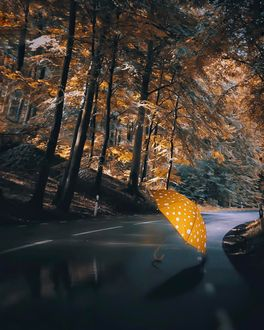 Фото Желтый в горошек зонт лежит на дороге, by _photobylotte