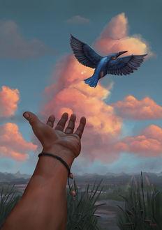 Фото Рука протянута к птице, by Schmaise