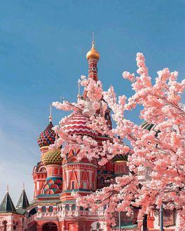 Фото Ветки вишни на фоне Храма Василия Блаженного