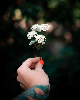 Фото В руке девушки белый цветок, by emmyk. photography