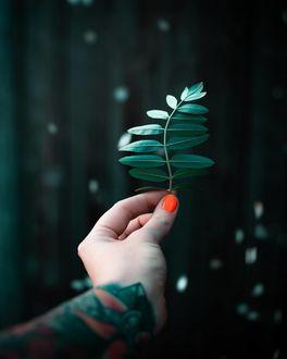 Фото В руке девушки листочек, by emmyk. photography