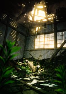 Фото Два енота в комнате заброшенного здания, by mocha