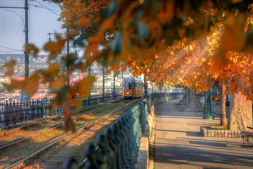 Фото Трамвай на путях, на переднем плане осенние ветки дерева. Фотограф Эдуард Гордеев