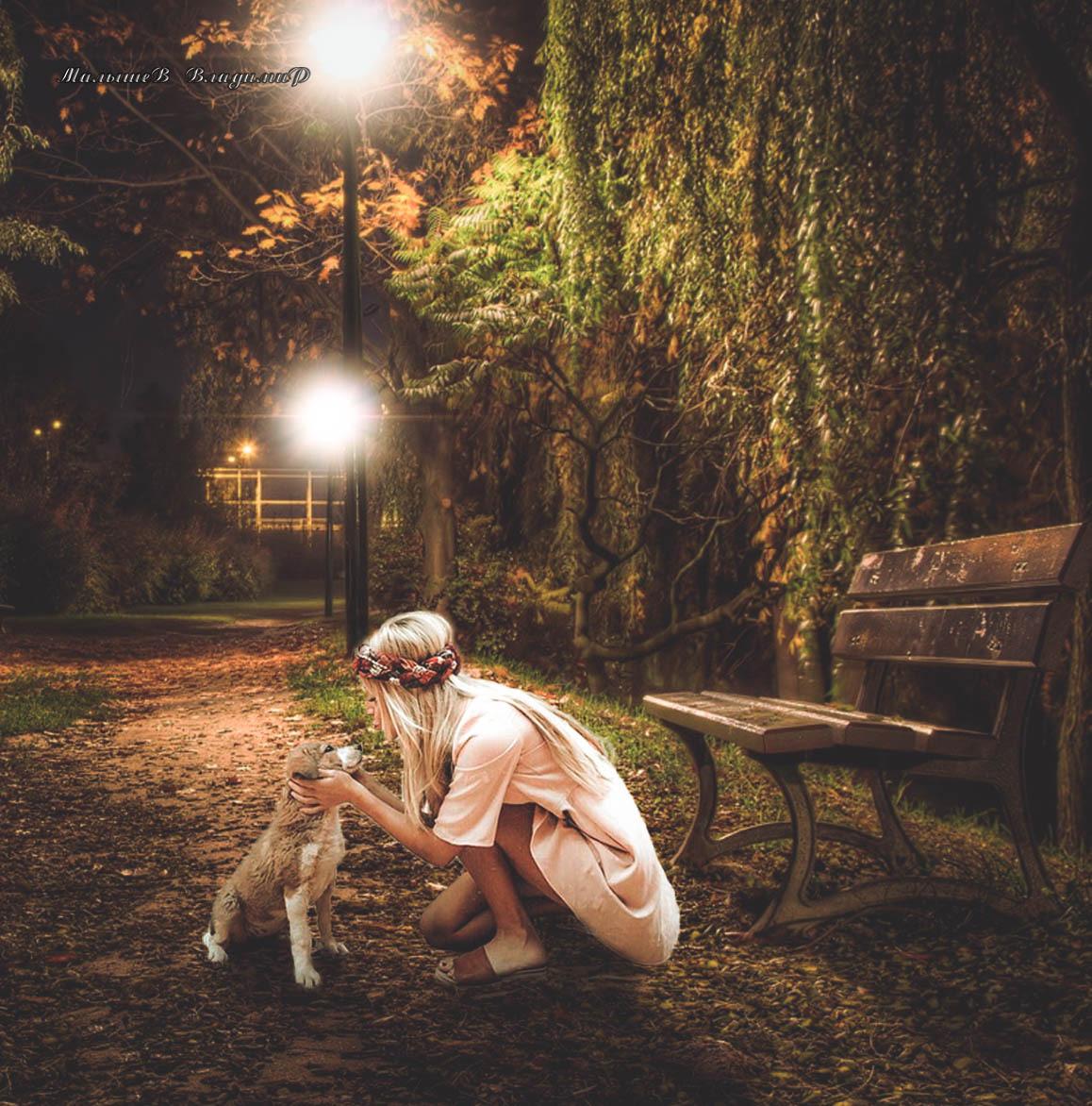 Фото Девушка с брошенным щенком в вечернем сквере
