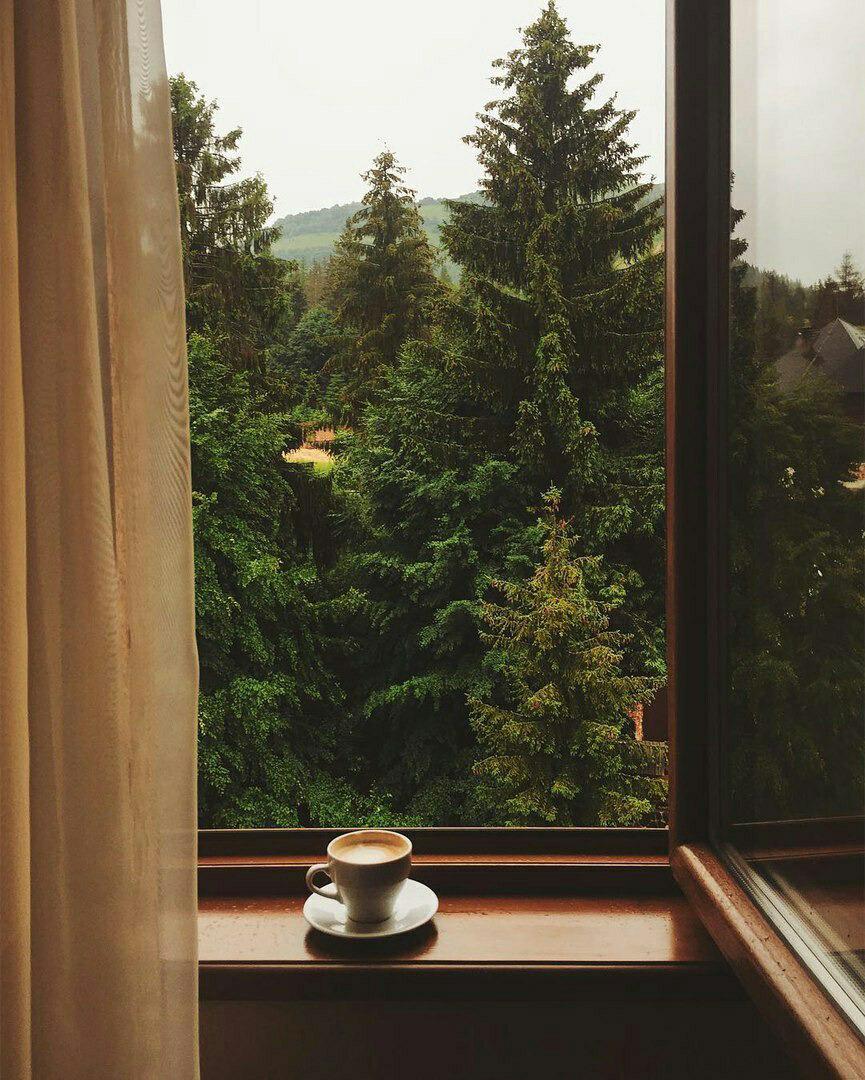 Окно с видом на лес картинки