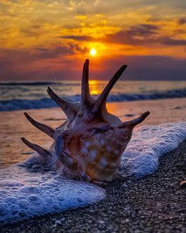 Фото Ракушка в пенистой морской воде, by nlgncan
