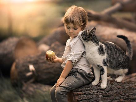 Фото Мальчик с яблоком в руке сидит рядом с кошкой на бревнах. Фотограф Iwona Podlasinska