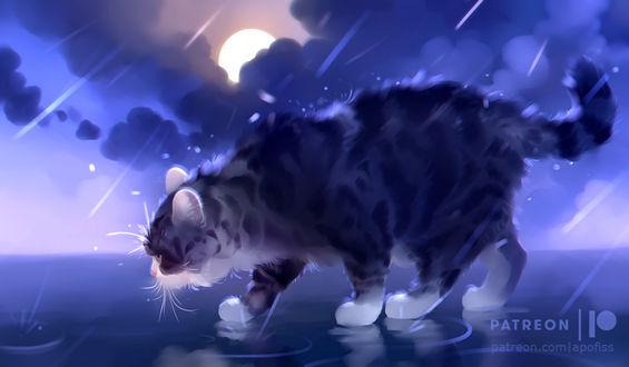 Фото Кошка стоит в луже под дождем, by Apofiss