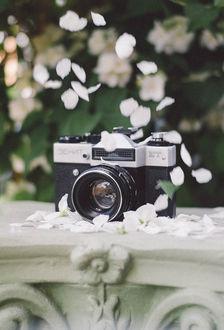 Фото Фотоаппарат под падающими лепестками. Фотограф Чернякова Анна