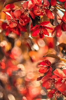 Фото Весенние красные цветы на размытом фоне. Фотограф Чернякова Анна