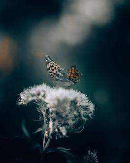 Фото Бабочка сидит на цветке, by Philipp Pilz