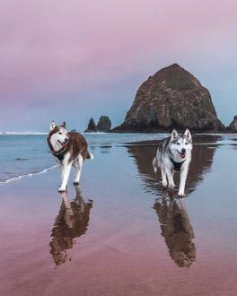 Фото Две хаски прогуливаются на берегу моря, by Husky Squad