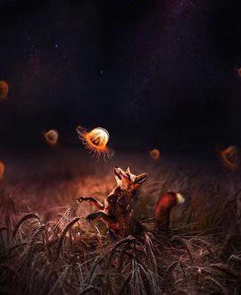 Фото Лиса играет с парящими в воздухе медузами