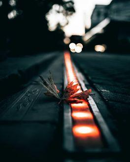 Фото Осенний листок на дороге, by omeryesilirmak