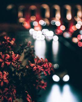 Фото Куст цветов на фоне ночных огней, by omeryesilirmak