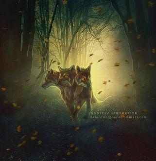Фото Трехглавый волк в лесу, by Dani-Owergoor