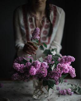 Фото Девушка ставит веточку сирени в вазу
