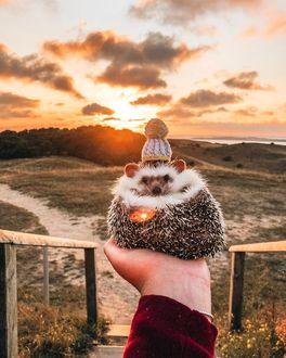 Фото Ежик в вязаной шапочке лежит в руке на фоне заката, by hedgehogwin