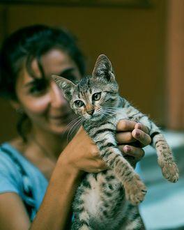 Фото Девочка держит кошку в руках