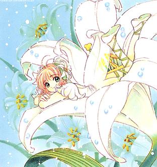 Фото Сакура Киномото / Sakura Kinomoto из манги Сакура — собирательница карт / Cardcaptor Sakura лежит на цветке лилии