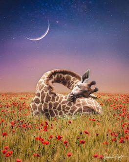 Фото Жираф на маковом поле, by sphantasy_art