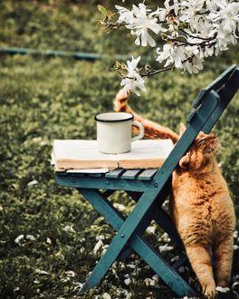 Фото Рыжая кошка у стула с кружкой, by Benjamin Prokaj