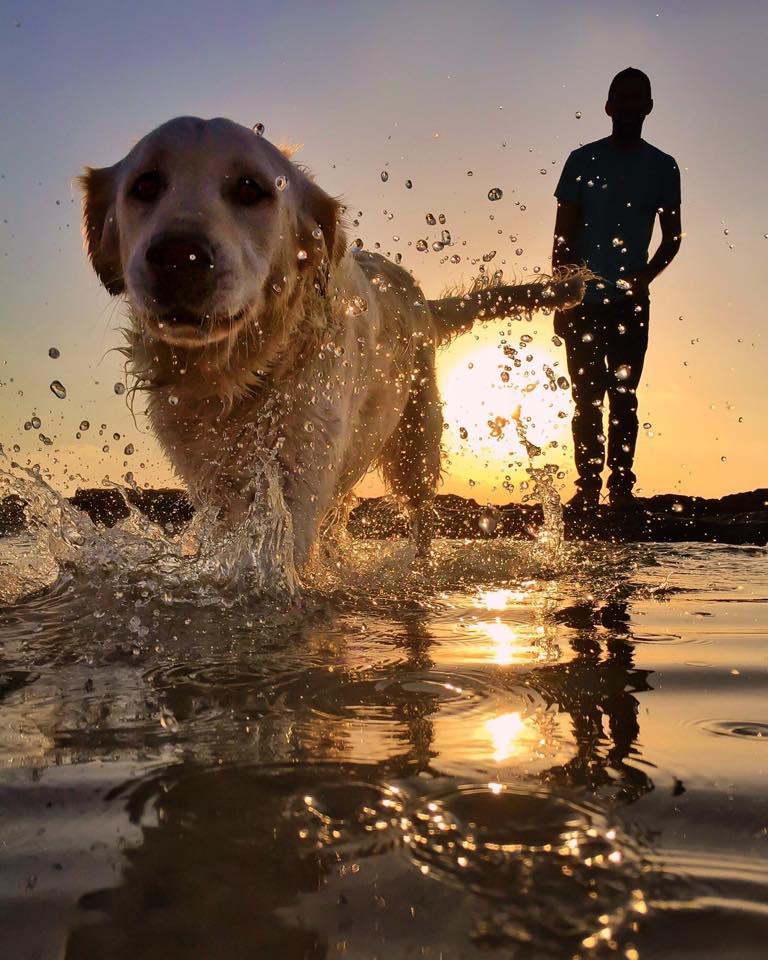 Фото Парень смотрит на бегущую по воде собаку породы лабрадор-ретривер