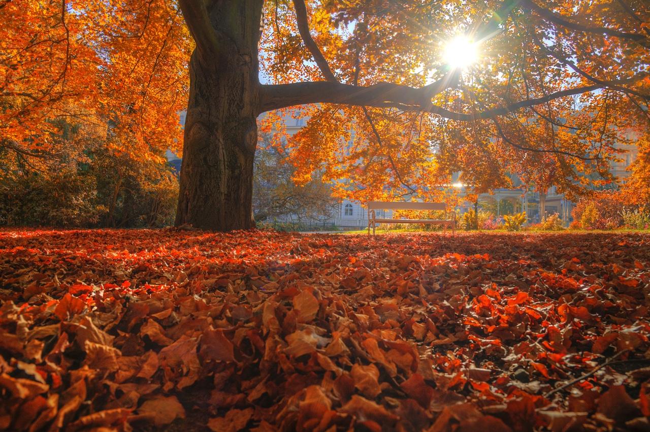 Фото Осень в Карловых Варах, Фотограф Эдуард Гордеев