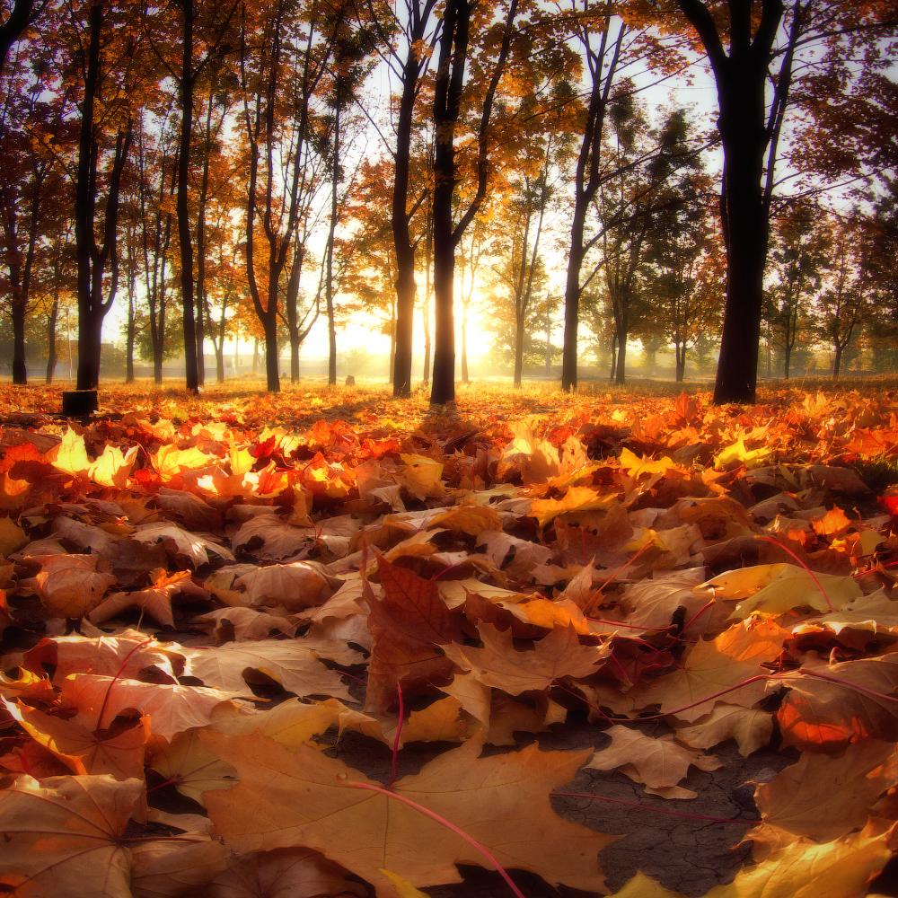 Фото Работа - Цвет осени, солнце освещает осенние деревья и опавшие листья. Фотограф Виктор Тулбанов