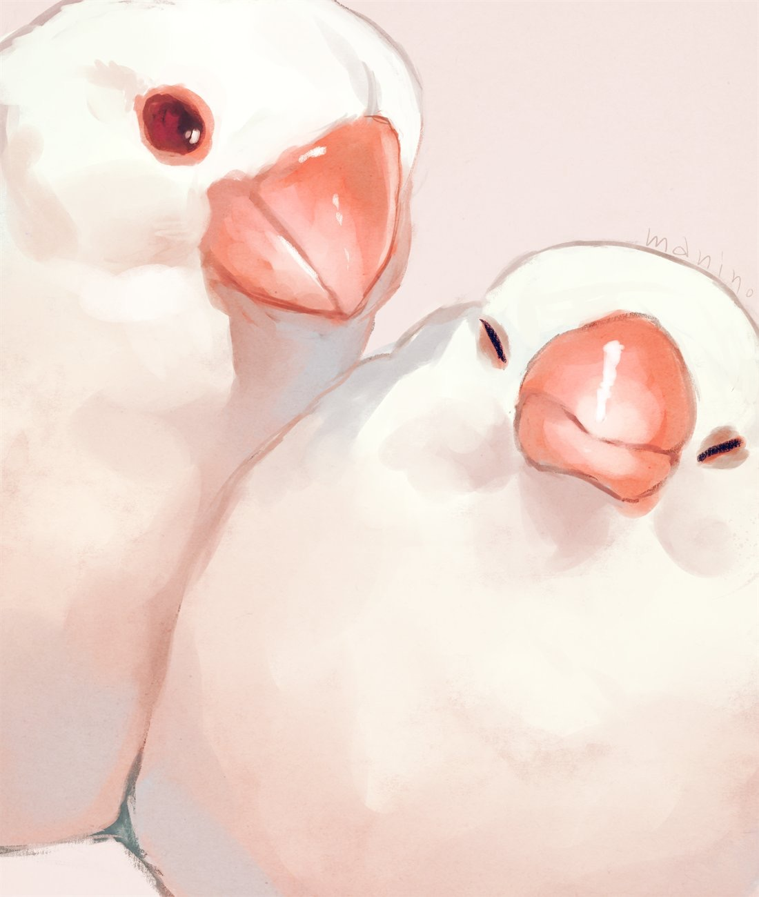 Фото Два попугайчика, by manino