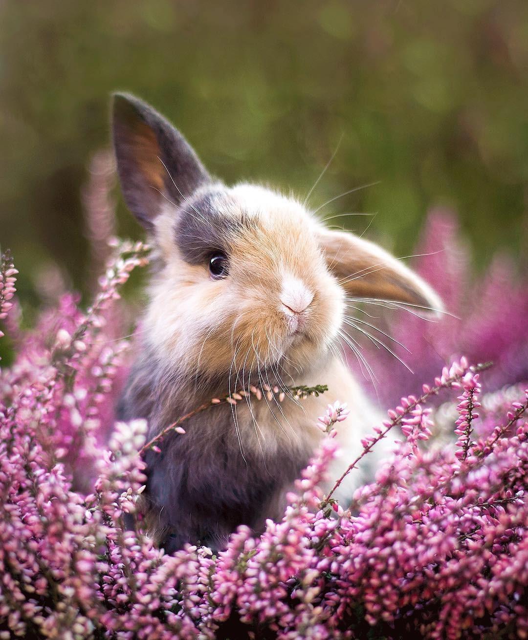 смысл том, милые кролики фото крыму победе