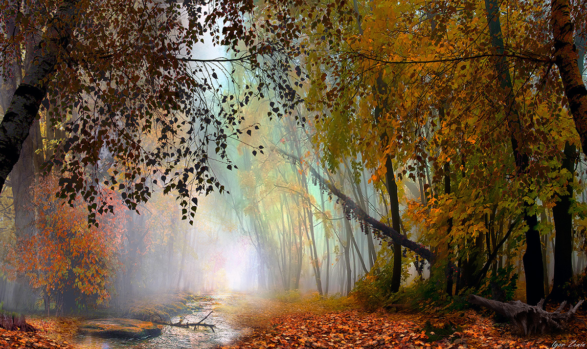 Фото Осенний листопад, фотограф Igor Zenin