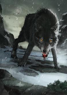 Фото Злой волк под дождем, by Gloria Ocete