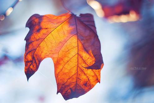Фото Осенний листок на размытом фоне, by John-Peter