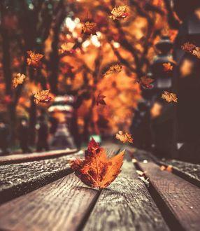 Фото Осенний лист на лавочке