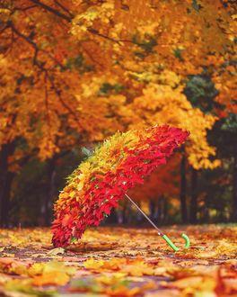 Фото Зонт в осенних листьях, by mazurevanasta