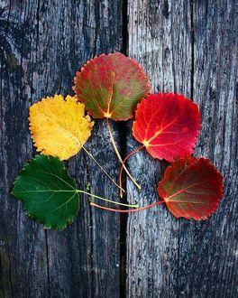 Фото Осенние листья на досках, by fisildayansair